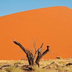 duna 45 - Namib