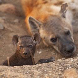 iena con cucciolo