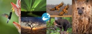 Amazing Nature_pagina iniziale_con livelli